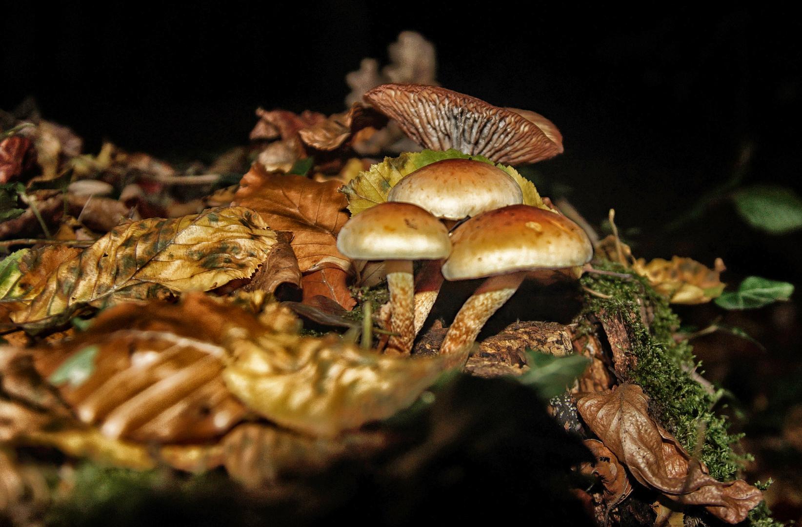 Pilze im Kurler Busch