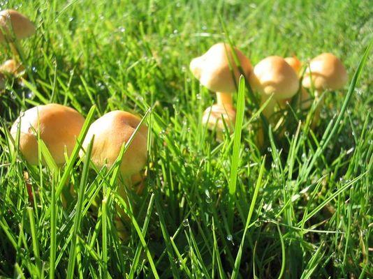 Pilze im Morgentau