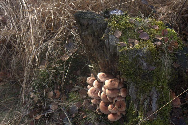 Pilze im Schw. Moos