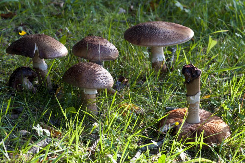 Pilze im Westerwald