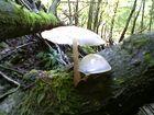 pilze in bayern sind anders als die anderen