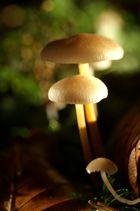 Pilze , mein erster Versuch