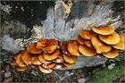 Pilze mit Gelatine überzogen?
