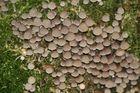 Pilze oder doch Muscheln...?