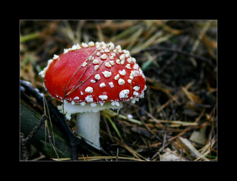 Pilze sammeln ..... (Pfalz #3)