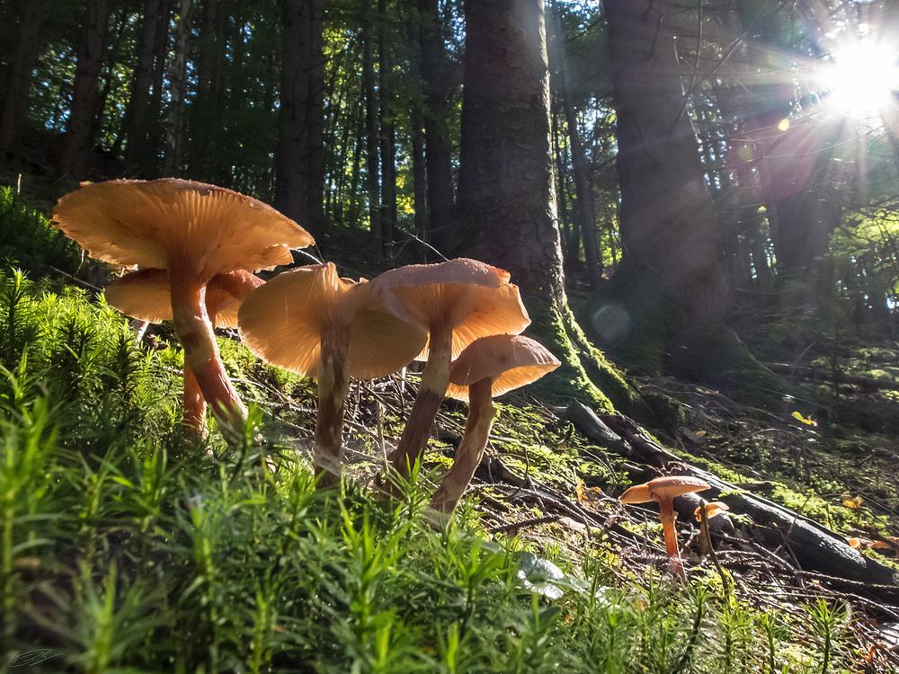 Pilze sonnen sich