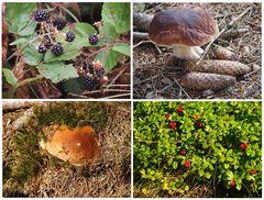 Pilze und Beeren