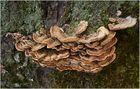 Pilze und Flechten ...