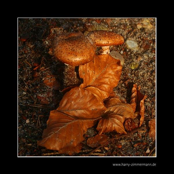 Pilze und Laub :-)