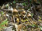 Pilze und Moos