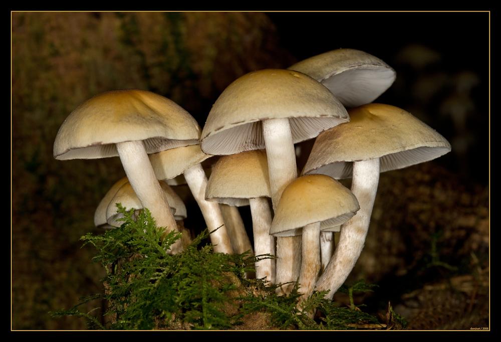 --- Pilzfamilie ---