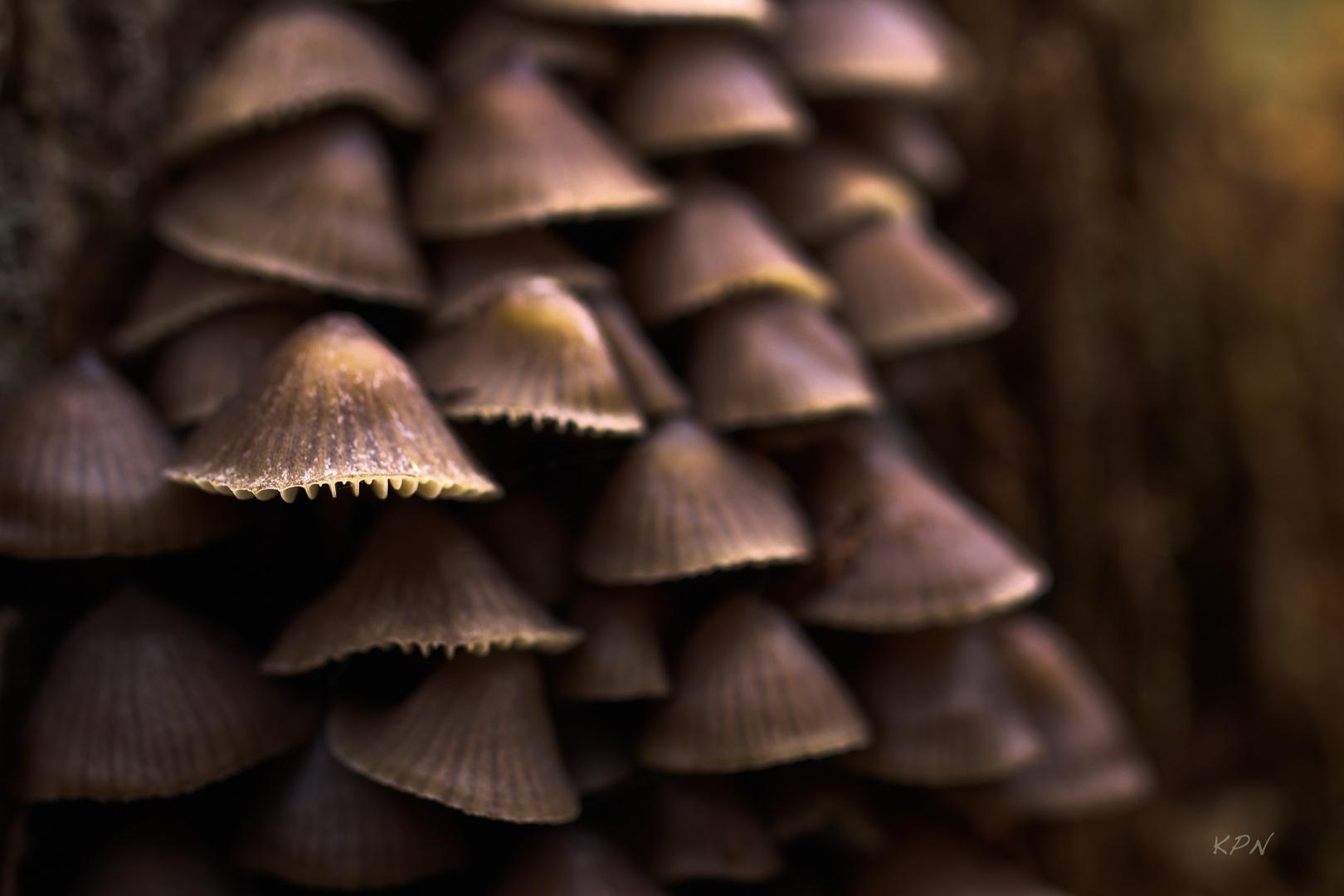 Pilzfamilie