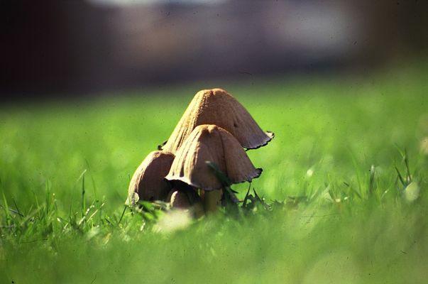 Pilzfamilie.