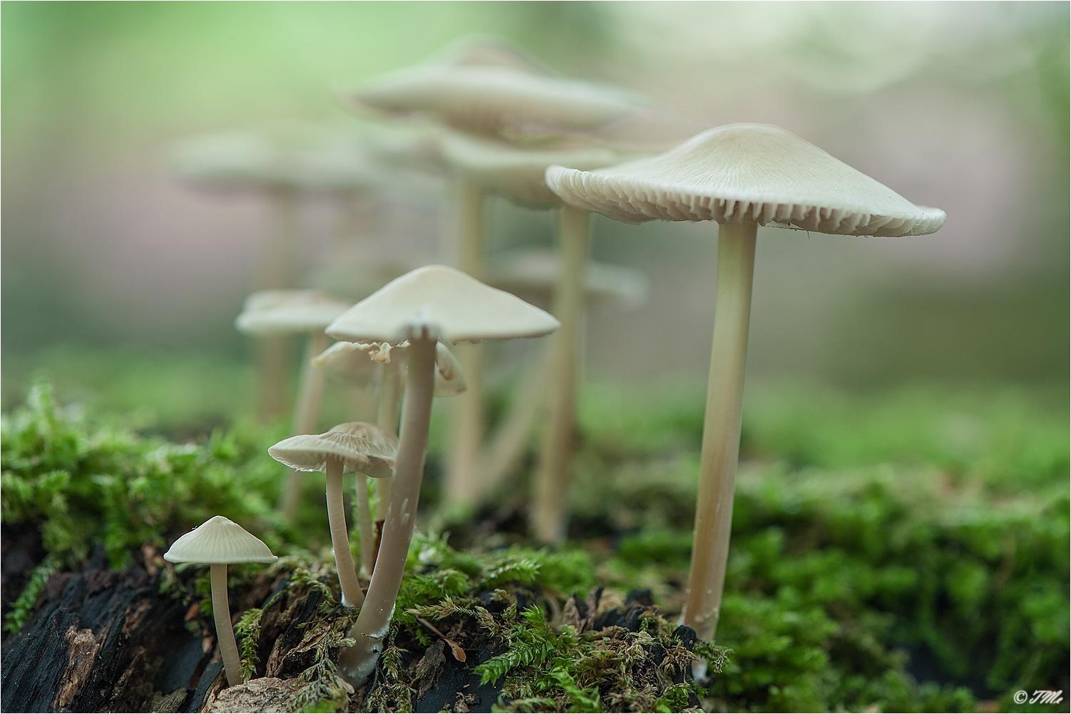 Pilzfamilie...