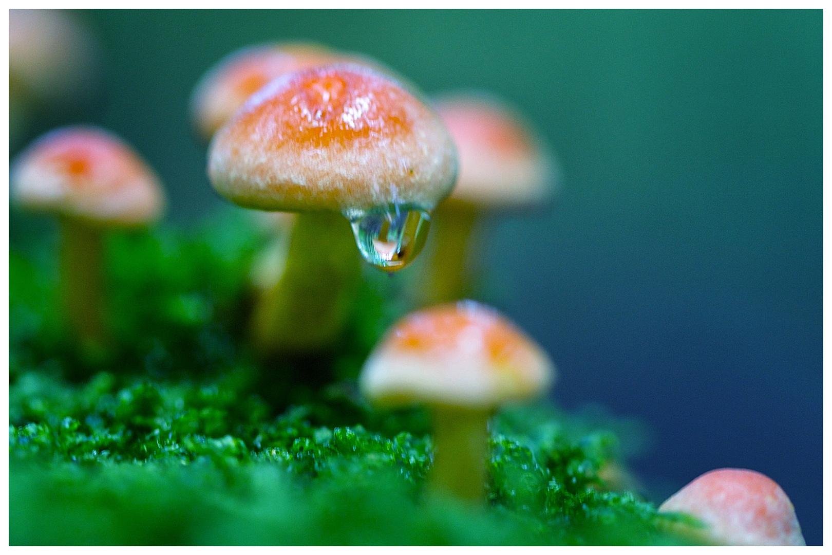 Pilzfamilie steht im Regen