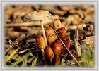 Pilzgruppe in der Frühlingsonne