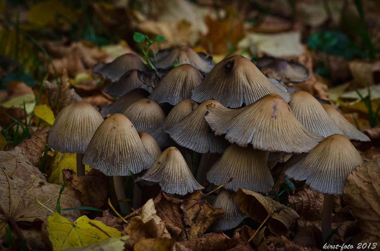 Pilzhaufen