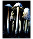 Pilzlinge