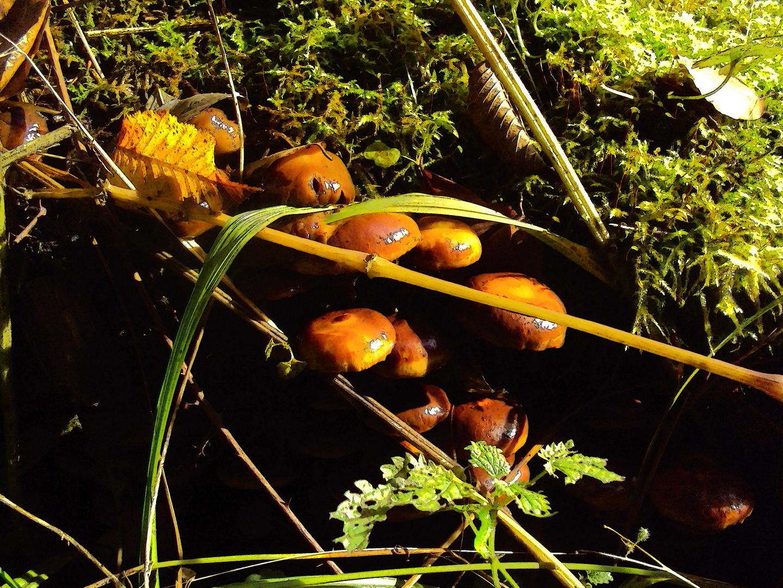 Pilzsaison 2013 im Wald von Heimbach