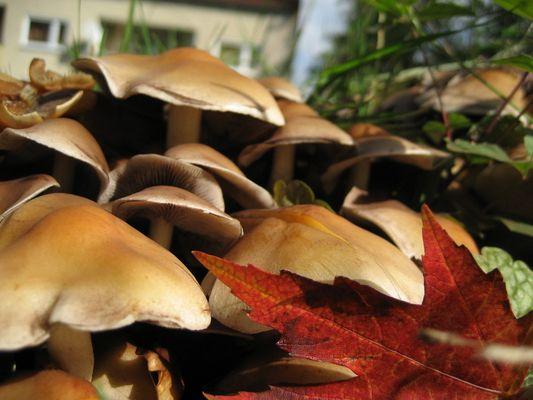 Pilzwald im Herbst....