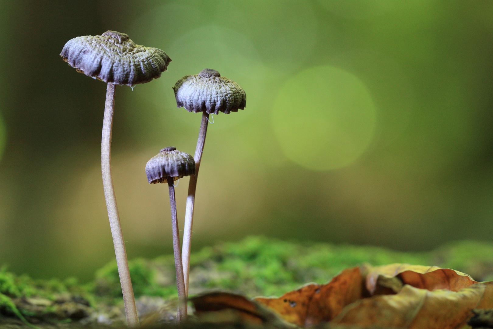 Pilzzeit - Herbstzeit