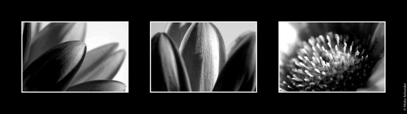 * pimp my flower * Triptychon
