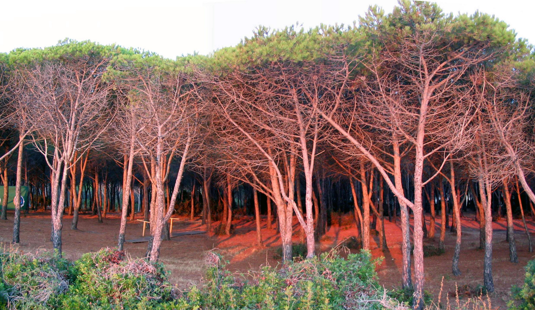 pinède au soleil levant, Sardaigne