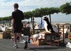 Pingouin à l'arrêt