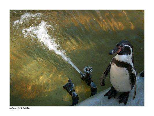 Pinguí