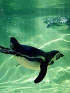 Pinguin :)