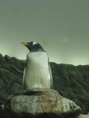Pinguin im Düsseldorfer Aquazoo
