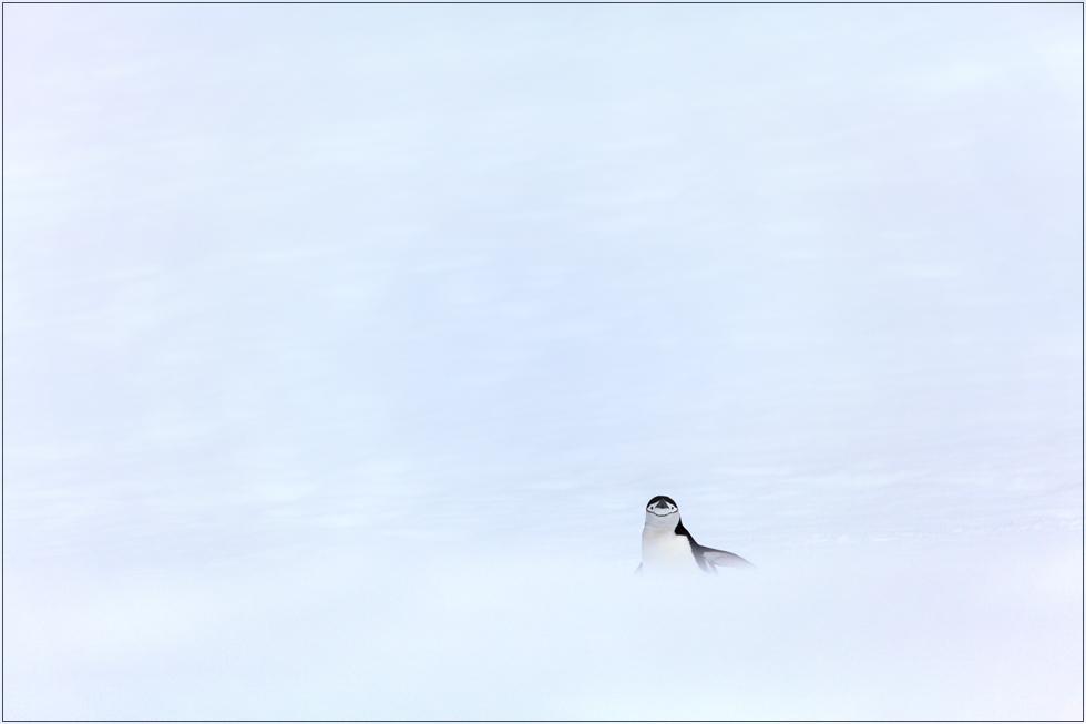 Pinguin im Nichts