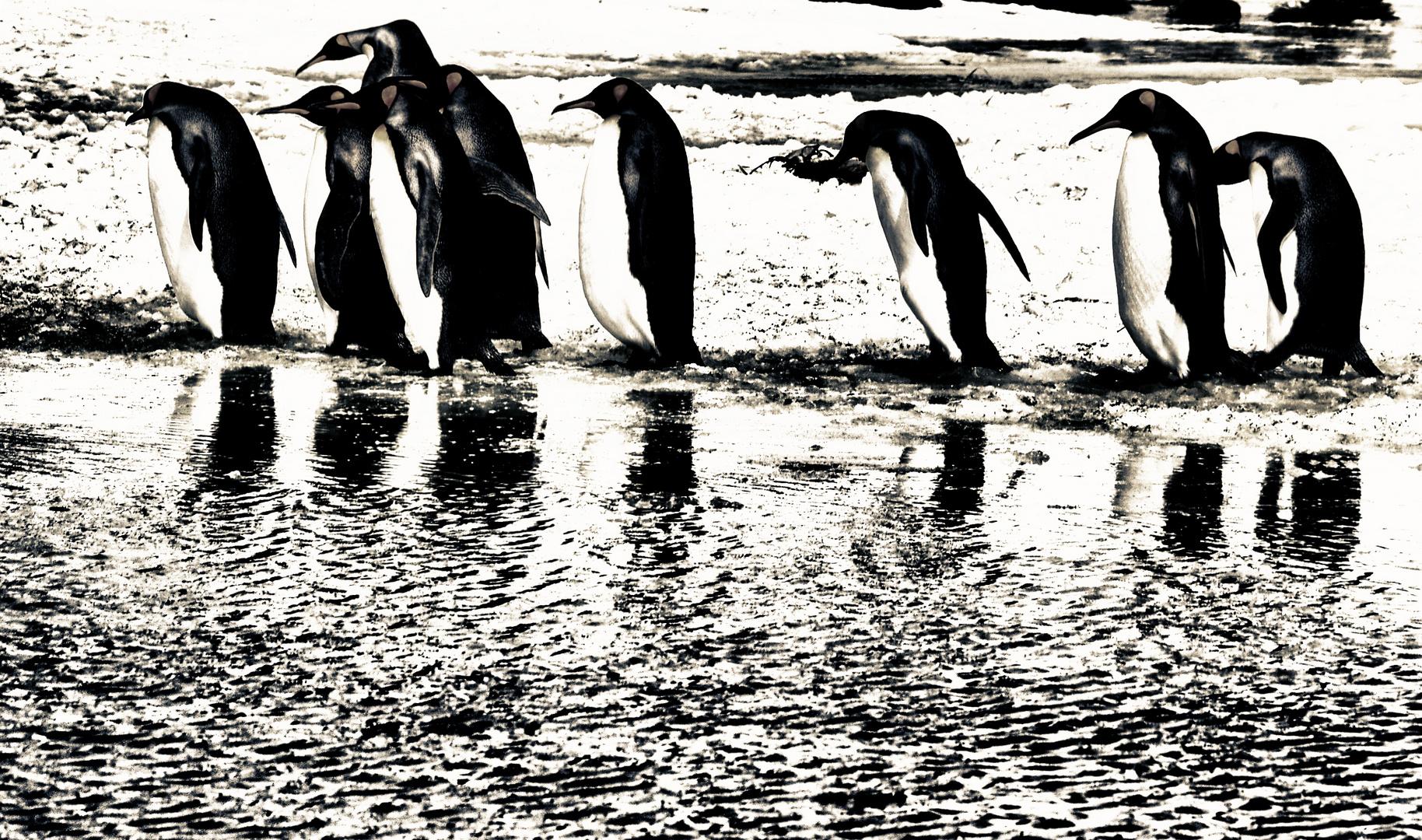 pinguine ...