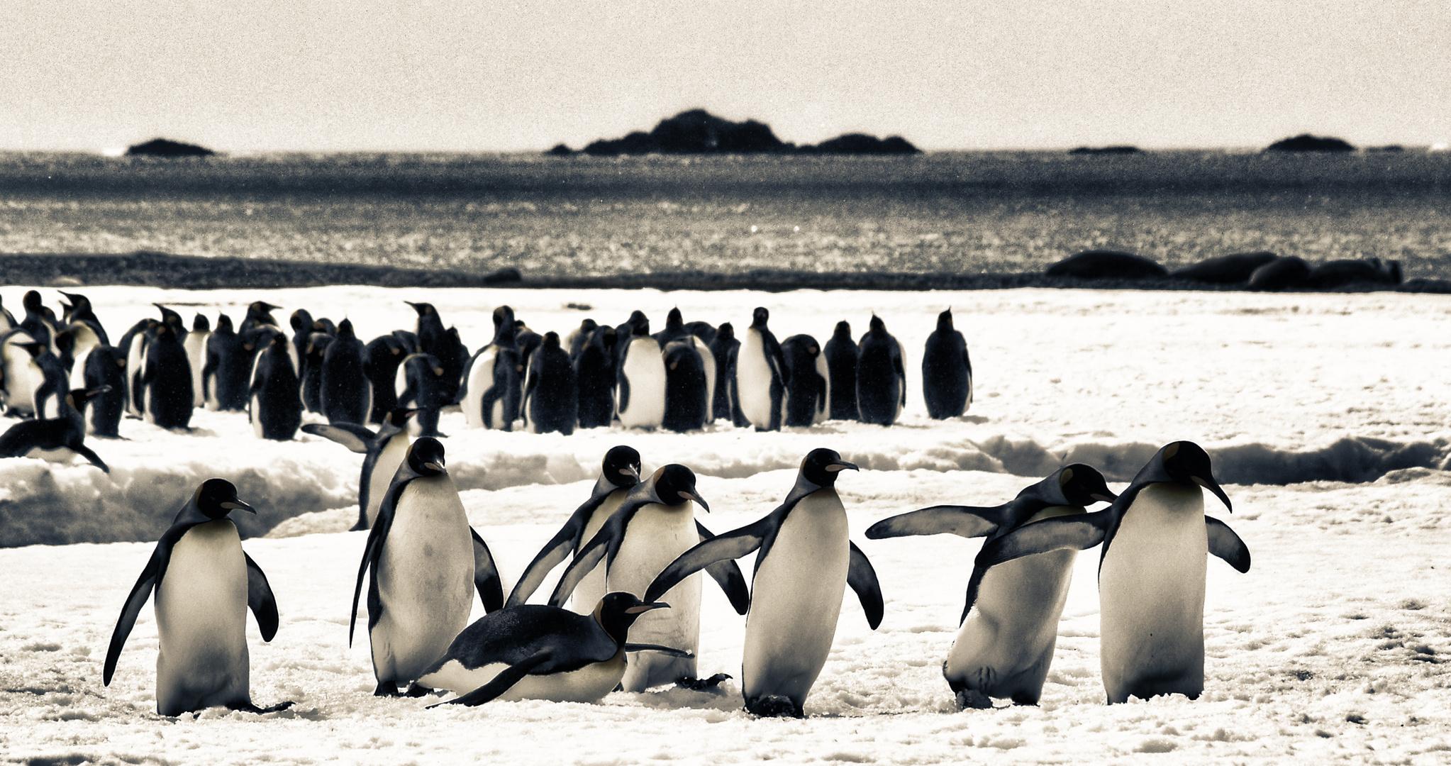 pinguine .