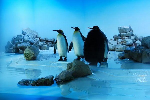 Pinguine...