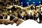 Pinguine auf Teneriffa 2 =)