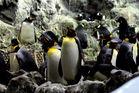 Pinguine auf Teneriffa =)