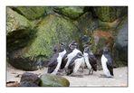Pinguine?