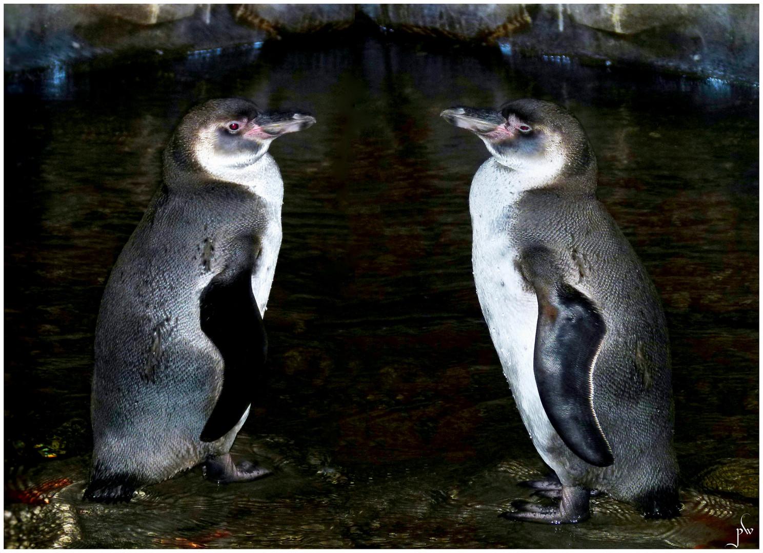 Pinguine bei Hagenbeck - Gegenüberstellung