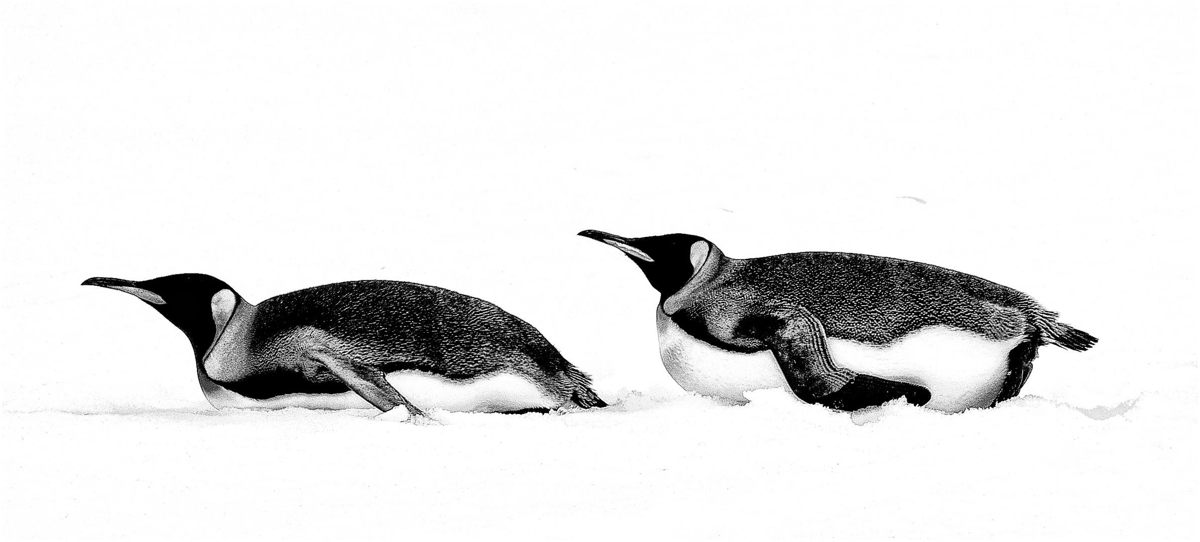 pinguine im schnee ...