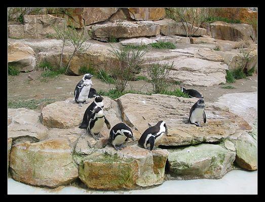 pinguine im zoo berlin