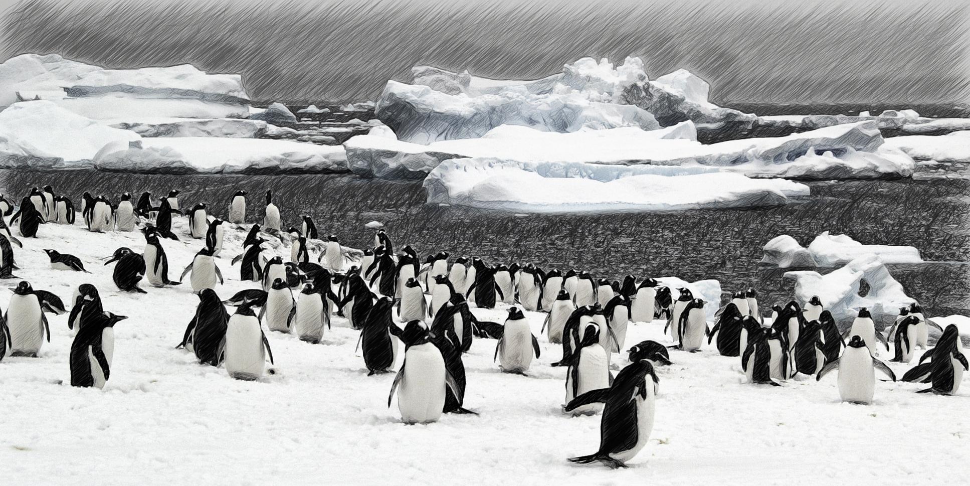 pinguine in der antarktis ...