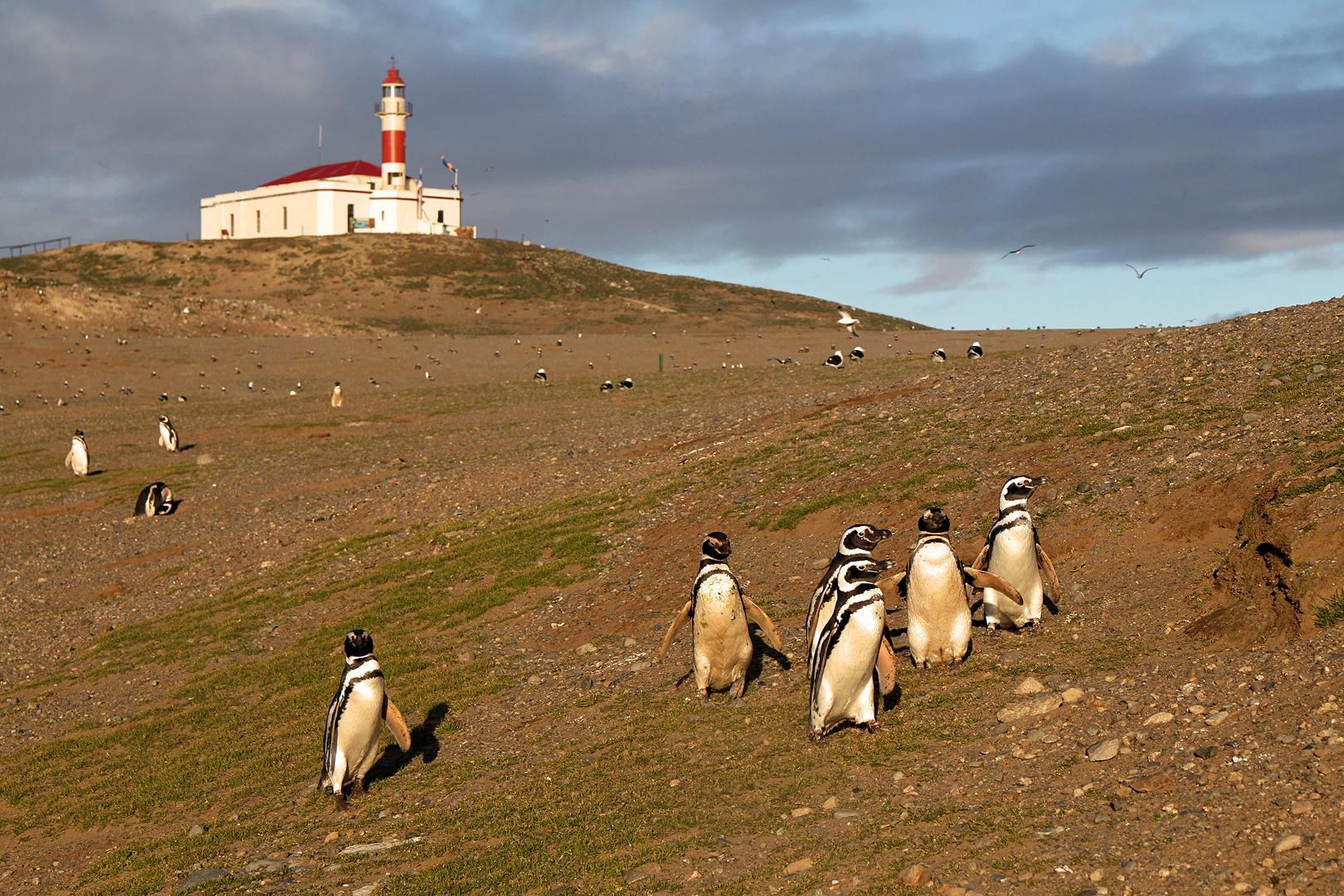 Pinguine in Südamerika