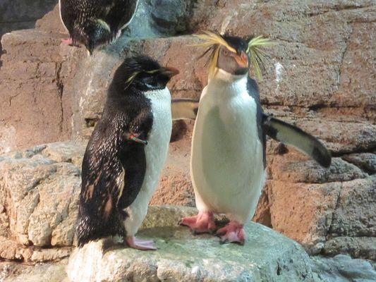 Pinguine, meine Lieblingstiere im und neben dem Wasser