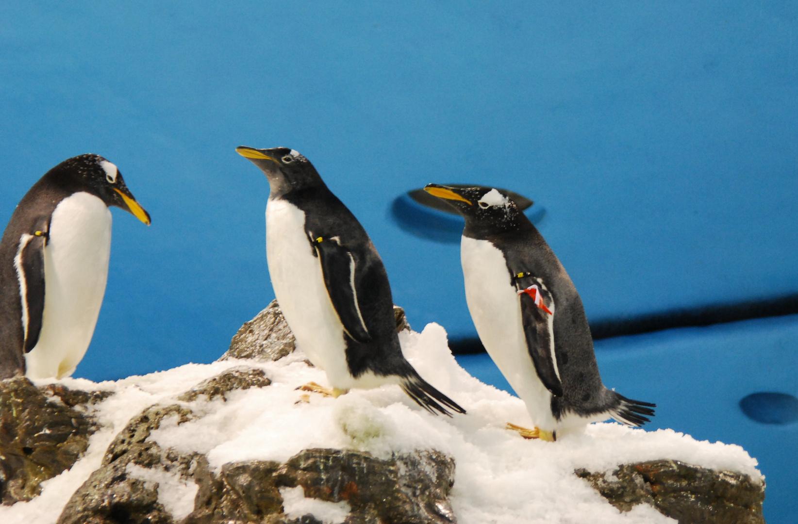 Pinguine mit Nikon d40x