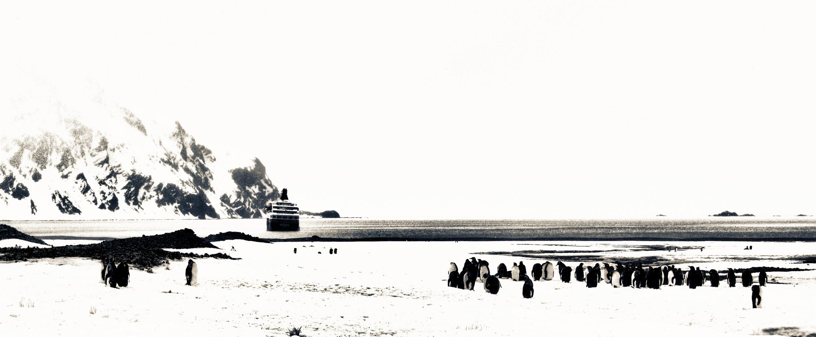 pinguine und ein schiff in der ferne ...