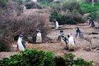 Pinguinera - Peninsula Valdes