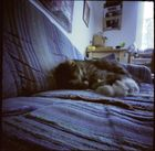 pinhole-cat 2