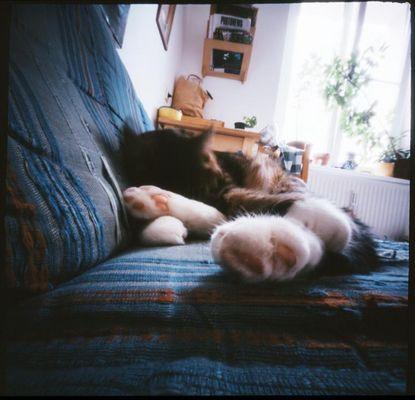 pinhole-cat