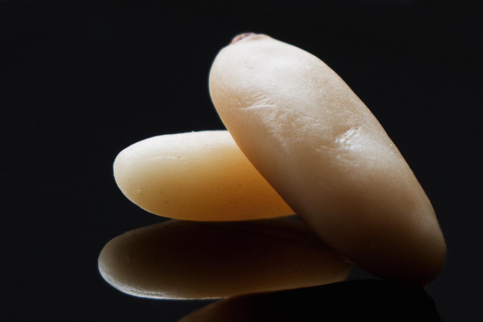 Pinienkerne ganz groß 1